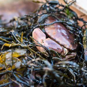 Freshly-caught-crab-Photo-Cred-Robert-Dahlberg-900×600